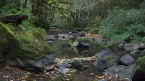 Forêt à feuilles caduques d'écoulement de l'eau de ruisseau de l'Orégon d'automne de feuilles banque de vidéos