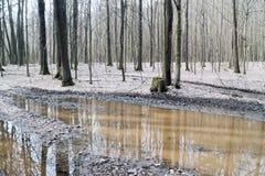 Forêt à feuilles caduques de ressort image stock