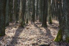 Forêt à feuilles caduques dense dans le contre-jour Image stock