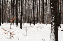 Forêt à feuilles caduques en parc Image libre de droits