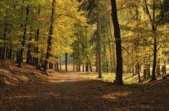 Forêt à feuilles caduques en soleil d'après-midi d'automne Image libre de droits