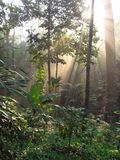 Forêt à feuilles caduques, Thaïlande Photographie stock libre de droits