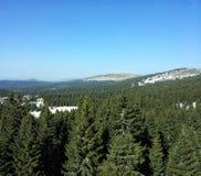 Forêt à feuilles persistantes de montagne Photos stock