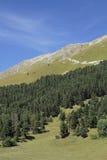 Forêt à feuilles persistantes sur la montagne Photo stock