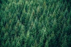 Forêt à feuilles persistantes - vue supérieure Photos stock
