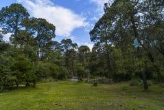 Forêt à Mexico image stock