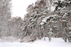 Forêt à Moscou après la chute de neige importante Image stock