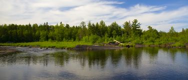 Forêt à travers le fleuve Image stock