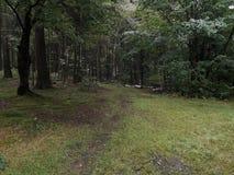 Forêt à un jour pluvieux photos stock