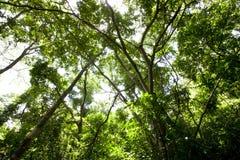 Forêt Photos stock