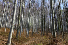 Forêt Photos libres de droits