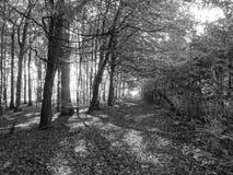 Forêt Image libre de droits