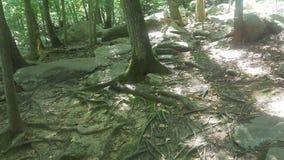 Forêt 11 Photos libres de droits
