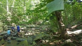 Forêt 37 Photo libre de droits