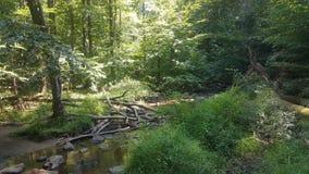 Forêt 58 Photographie stock libre de droits