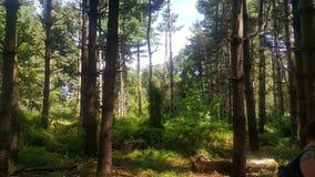 Forêt 71 Photographie stock libre de droits