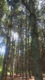 Forêt 76 Images libres de droits