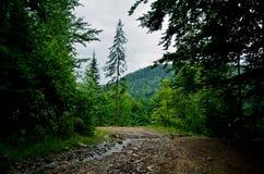 Forêt Image stock