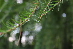Forêt Images stock
