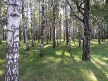Forêt Photo libre de droits
