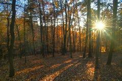 Forêt - 9 Photo libre de droits