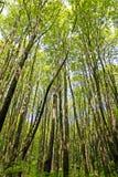 Forêt abondante Photo libre de droits