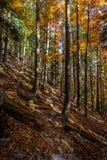 Forêt alpine d'automne coloré avec le chemin rocheux jusqu'au dessus de la crête de Stadelwand photos stock