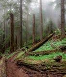 Forêt antique Image libre de droits