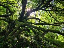 Forêt antique au Pays de Galles Photos stock