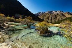 Forêt antique et piscine dépositionnelle minérale de lac Photographie stock libre de droits