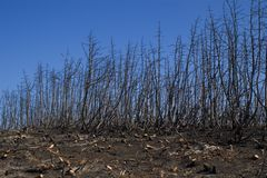 Forêt après incendie Image libre de droits