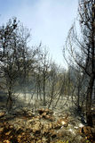 Forêt après incendie Photos libres de droits