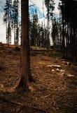 Forêt après la calamité photos stock