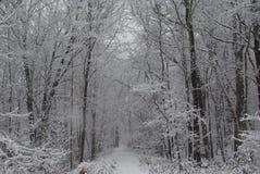 Forêt après la tempête Image libre de droits