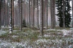 Forêt après les chutes de neige légères Photographie stock