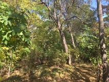 Forêt, arbres Photo libre de droits