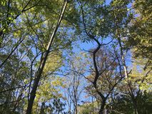 Forêt, arbres Photos stock