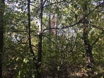 Forêt, arbres Photographie stock
