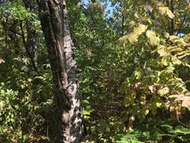 Forêt, arbres Image libre de droits