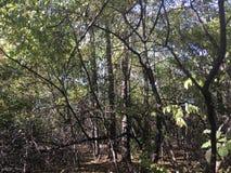 Forêt, arbres Images libres de droits