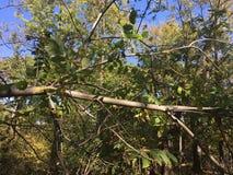 Forêt, arbres Feuilles et branches Image stock