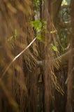 Forêt asiatique du sud-est Photo stock