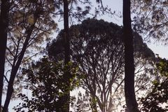 Forêt au coucher du soleil un jour froid images libres de droits