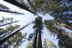 Forêt au-dessus de grand-angulaire Images libres de droits