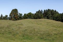 Forêt au-dessus de la colline Photographie stock