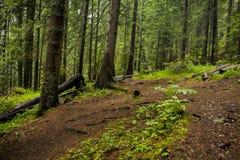 Forêt au-dessus des ponts merveilleux Images libres de droits