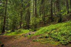 Forêt au-dessus des ponts merveilleux Image libre de droits