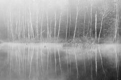 Forêt au matin brumeux photographie stock libre de droits