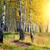 Forêt automnale images libres de droits