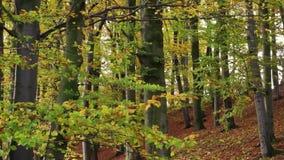 Forêt automnale clips vidéos